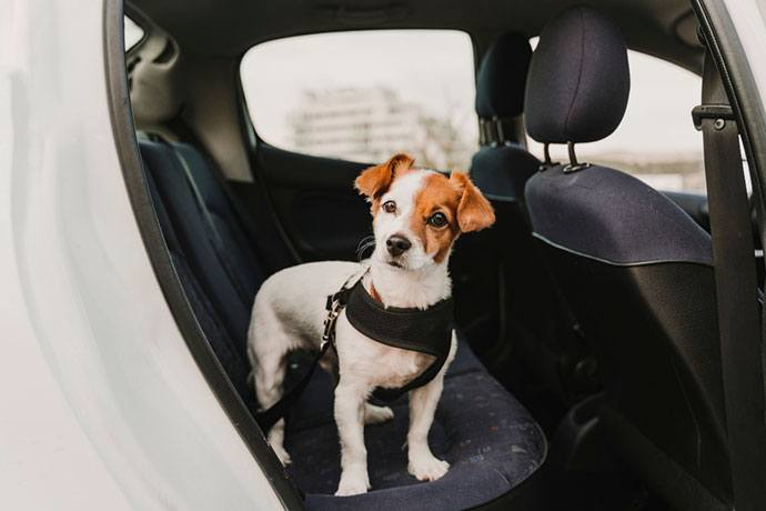 best dog car harness for small dogs