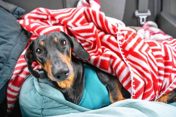 best rear car seat covers for dogs
