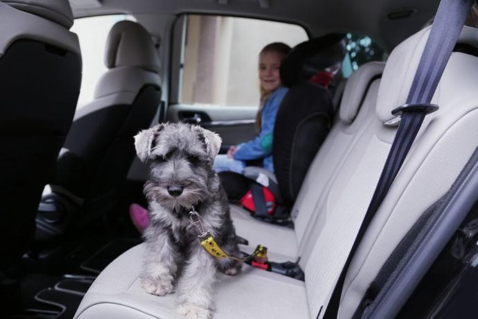 best dog car harness 2020
