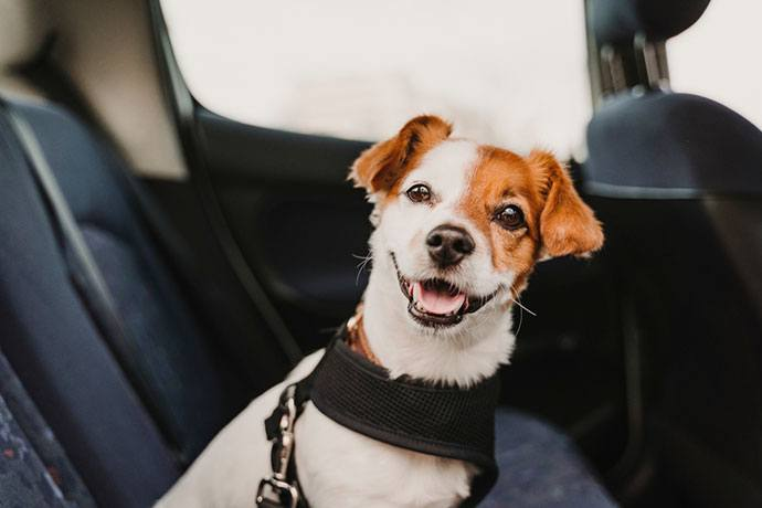 best dog harness for car and walking