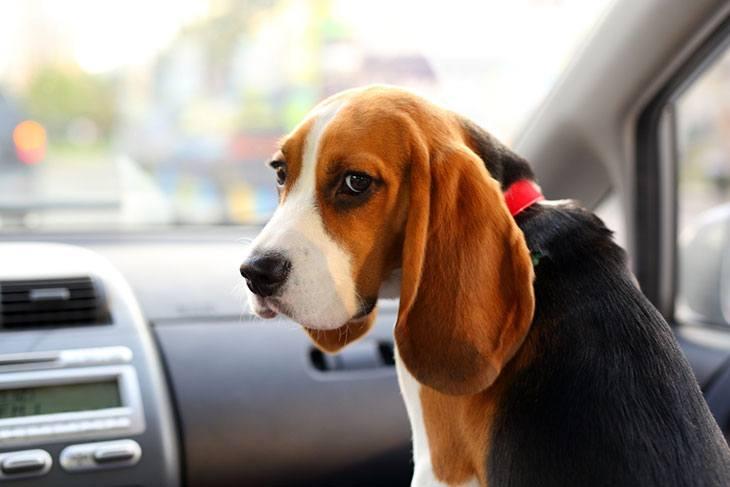best dog car gate
