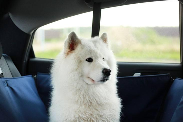 best car pet gate