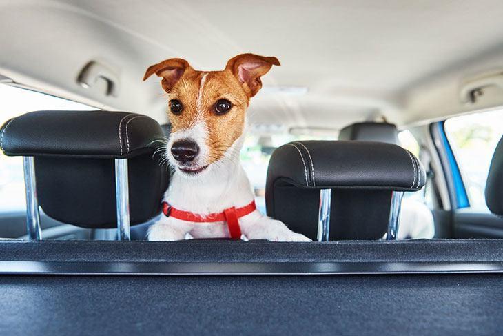 best pet car barrier