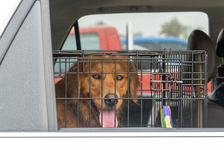 best dog crate for a car