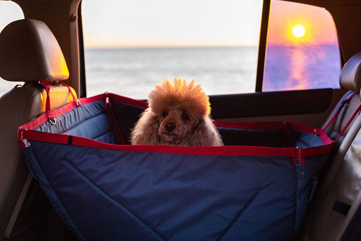 best pet carriers for car travel