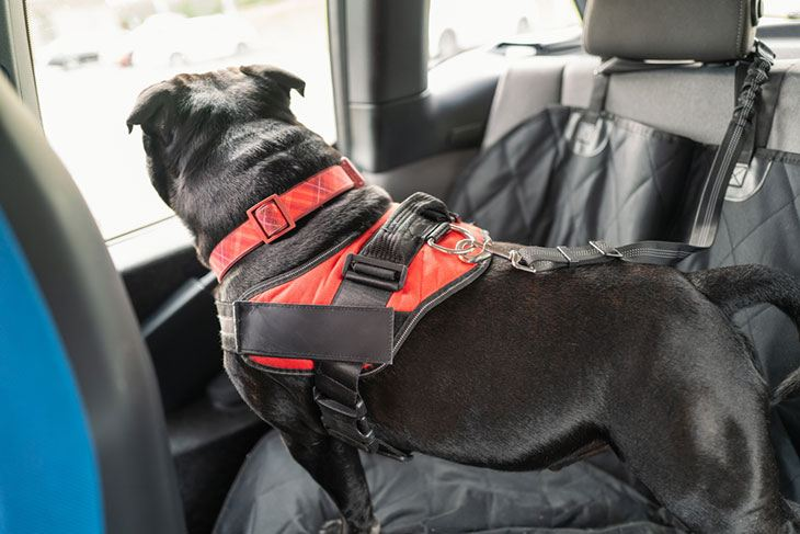 best pet carrier for the car