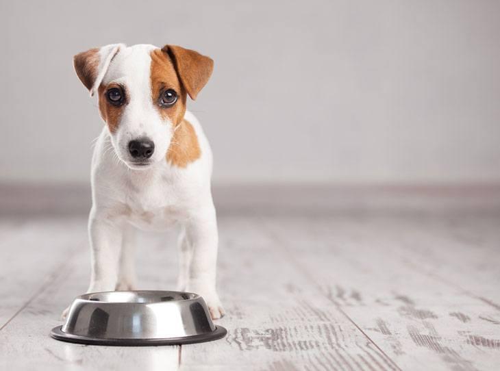 best non spill dog bowl