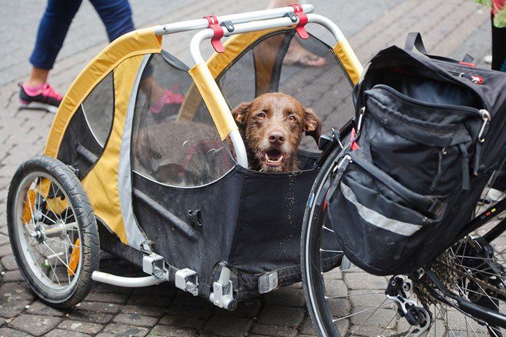 the best dog bike carrier