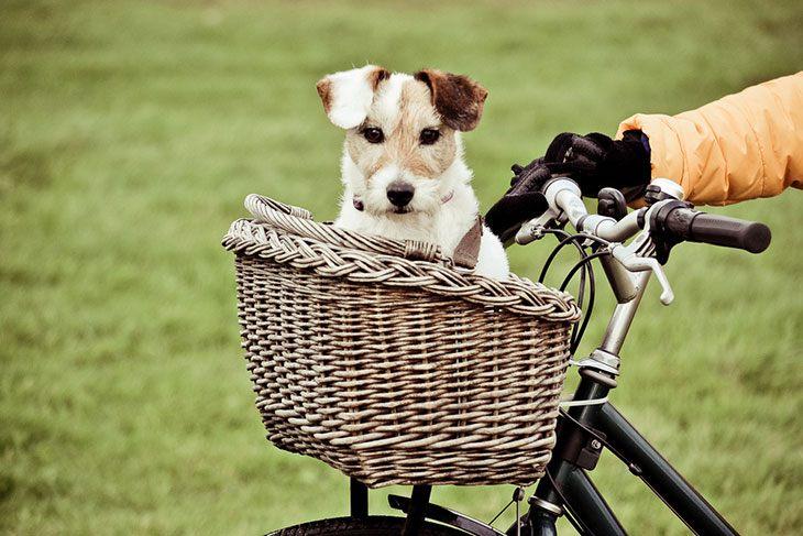 best dog carrier bike basket