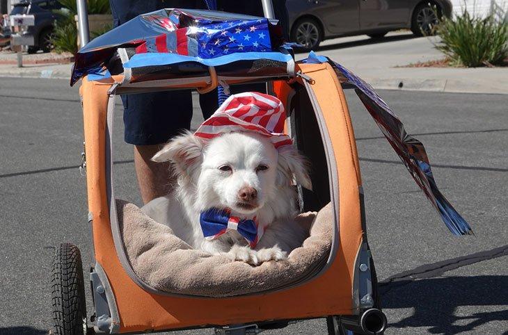 best pet brand dog stroller