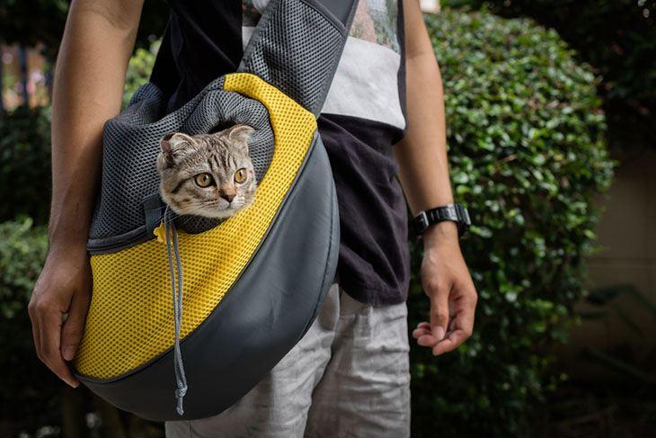 best affordable dog backpack