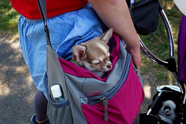 best pet sling review