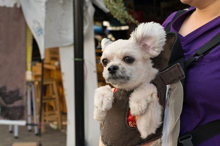 best dog carrying sling