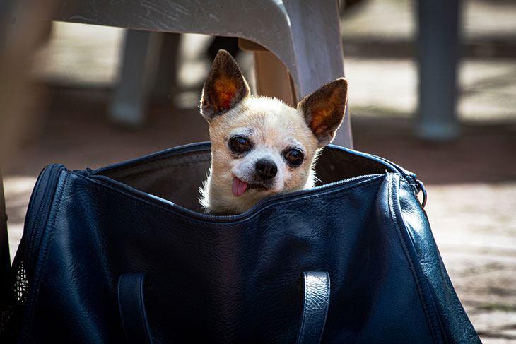 best small dog carrier purse