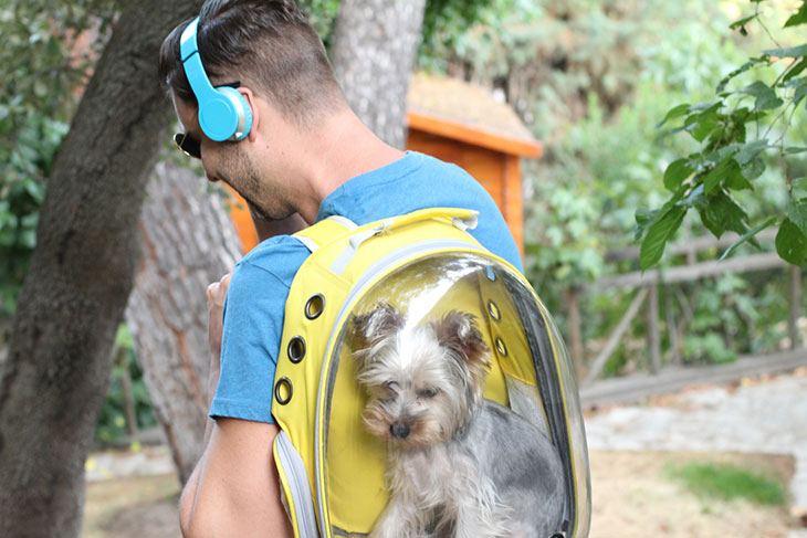 best dog travel backpack