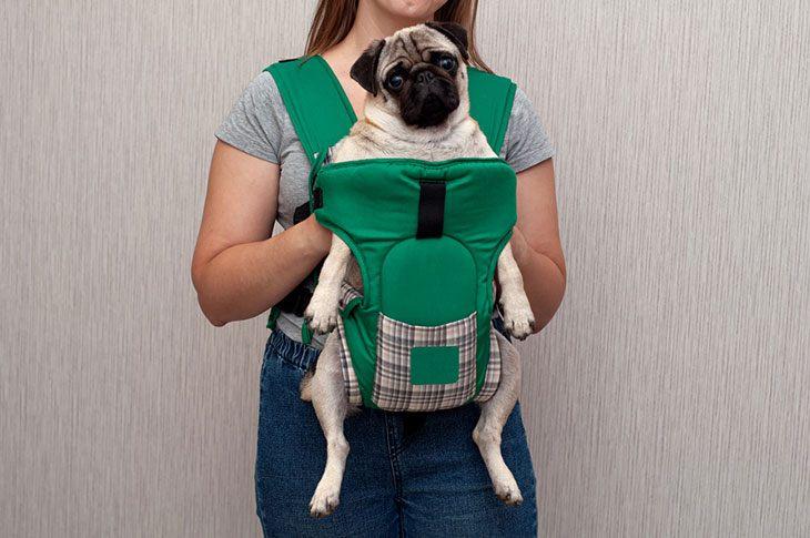 best dog car sling