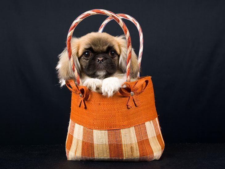 best dog gear bags