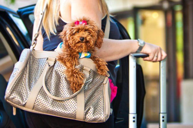 best dog travel bag