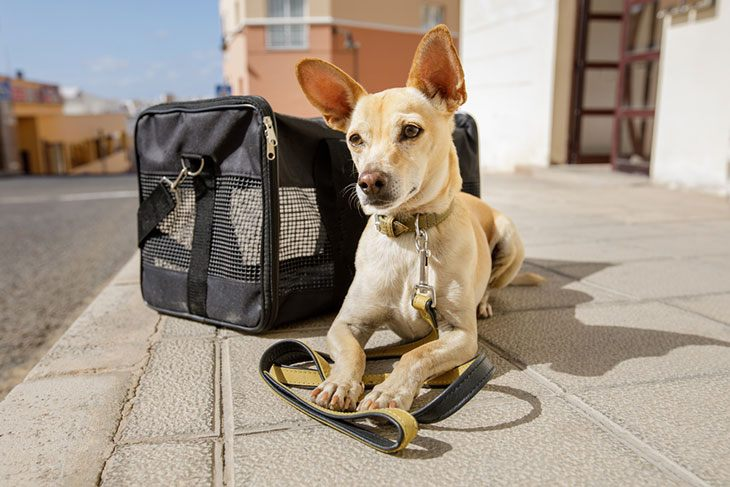best puppy travel carrier