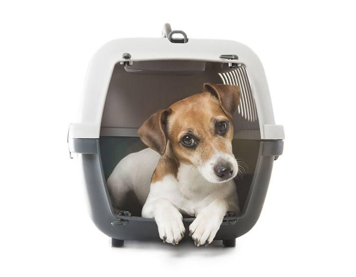 best dog carrier air travel